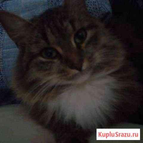 Кошка Переславль-Залесский