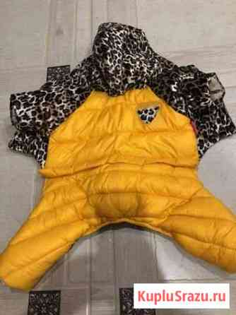 Одежда для мелких собак Ярославль