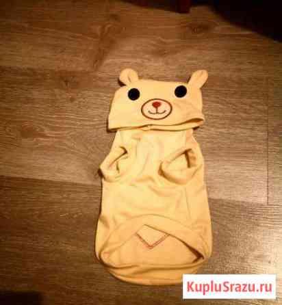 Одежда для собак Ярославль