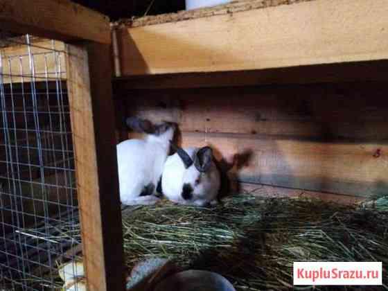 Кролики на продажу Колпашево
