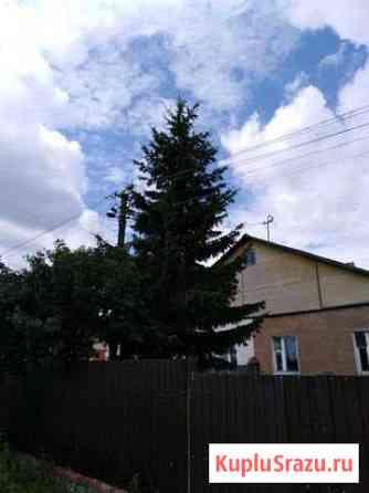 Живые ёлки Киреевск