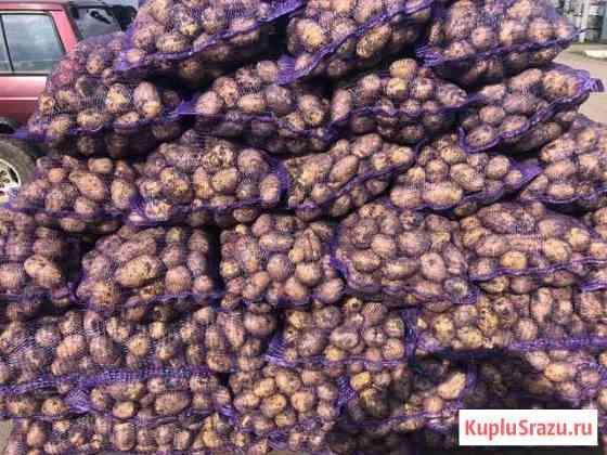 Картофель оптом Тюмень