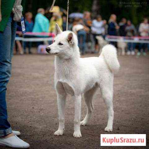 Собака Дубки