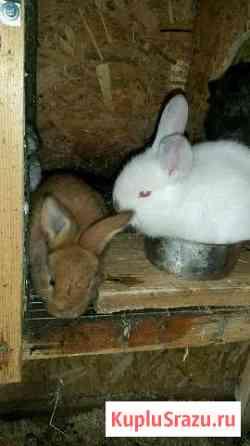 Кролик Углич