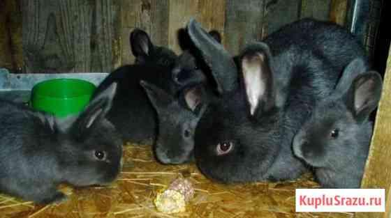 Продам кроликов венских Рыбинск