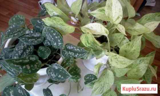 Растения для дома Ангарск