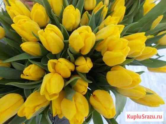 Тюльпаны оптом Strong Gold 60см от производителя Красноярск