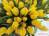 Тюльпаны оптом Strong Gold 60см от производителя