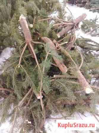 Дрова для бани сосновые Оренбург