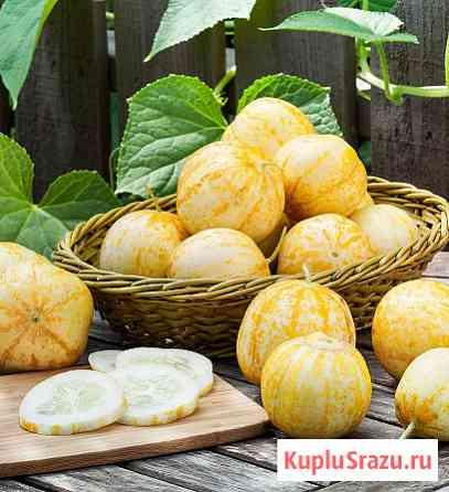 Огурец Хрустальное яблоко (огур-лимон) сорт семейная реликв. Семена Новосибирск