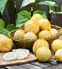 Огурец Хрустальное яблоко (огур-лимон) сорт семейная реликв. Семена