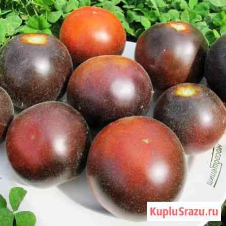 Мохнатый Кейт. томат. семена Новосибирск