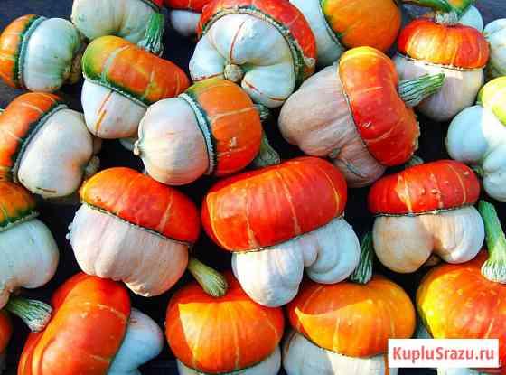 Тыква чалмовидная Грибок и съедобная и декоративная. семена Новосибирск