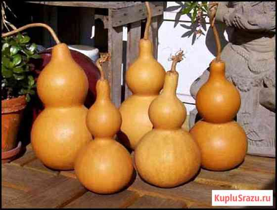 Тыква Лагенария - горлянка. тыква для посуды.семена Новосибирск