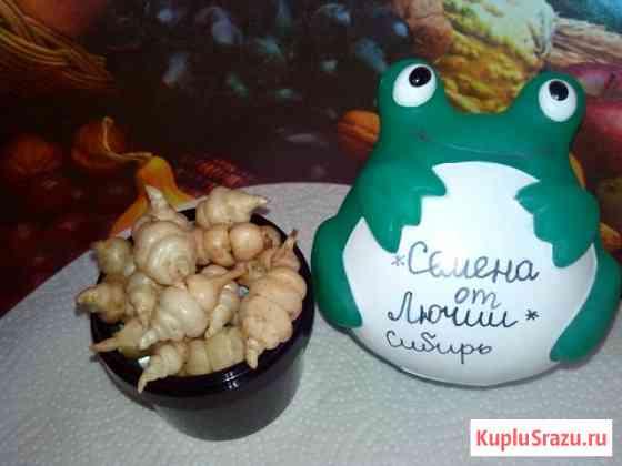 Стахис.китайский артишок клубеньки.вышлю с марта Новосибирск
