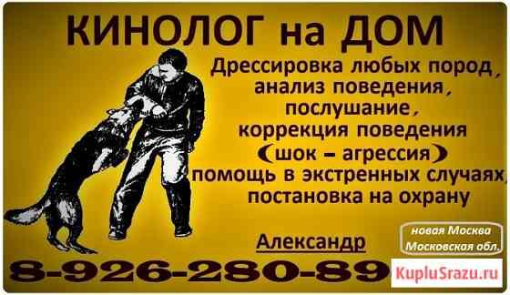 Дрессировка собак на дому Москва