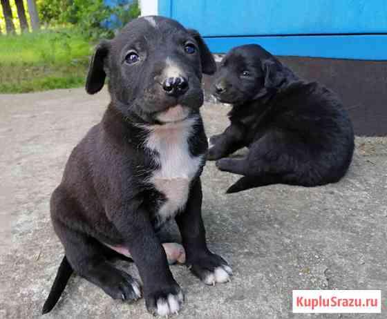 Чудесные маленькие щенки, мальчики и девочки в добрые руки Сочи