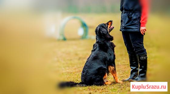 Дрессировка собак Елабуга Елабуга