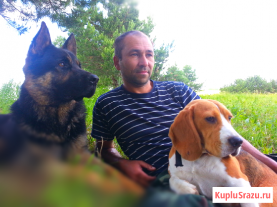 Дрессировка собак Нижнекамск и пригород Нижнекамск