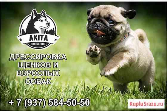 Школа для собак Akita Dog School Ижевск