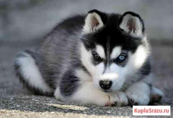 Дрессировка собак с передержкой Ижевск