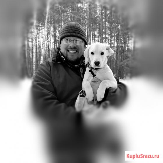 Дрессировка собак послушанию Елабуга Елабуга