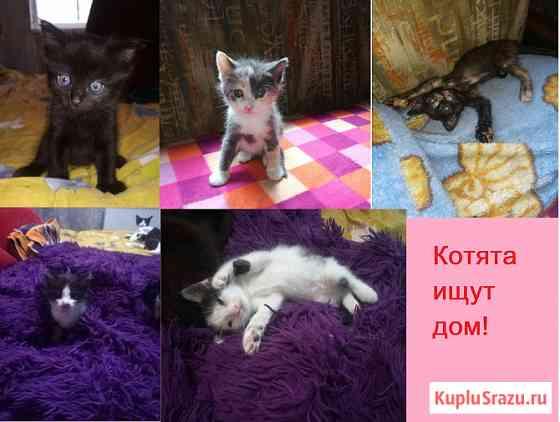 Котятки в добрые руки. Севастополь Севастополь