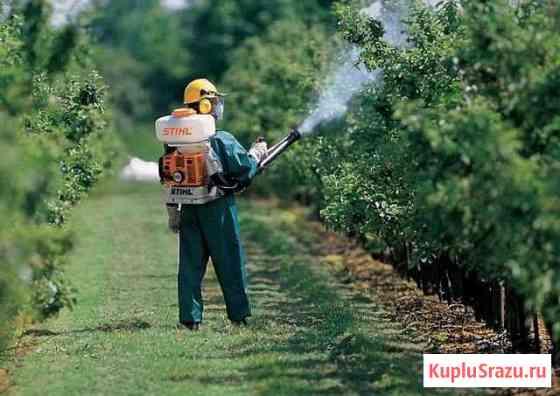 Прививка и обработка плодовых деревьев Чебоксары