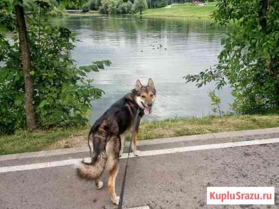 Выгул собак Москва