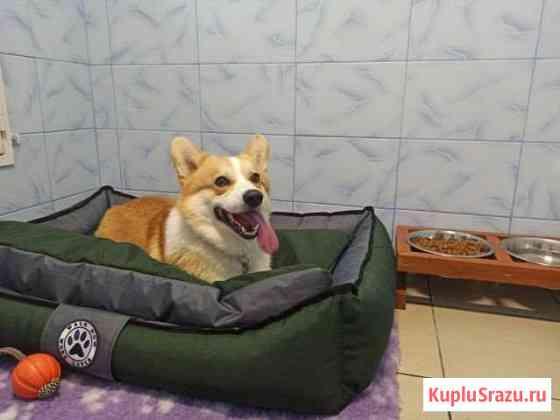 Передержка гостиница для собак Владимир