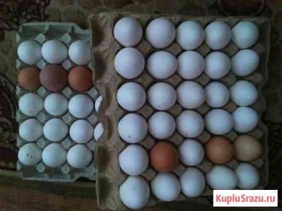 Продам яйцо куриное Белый Яр