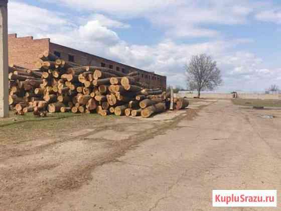 Зернохранилище,овощные склады в Краснодарском крае Михайловская