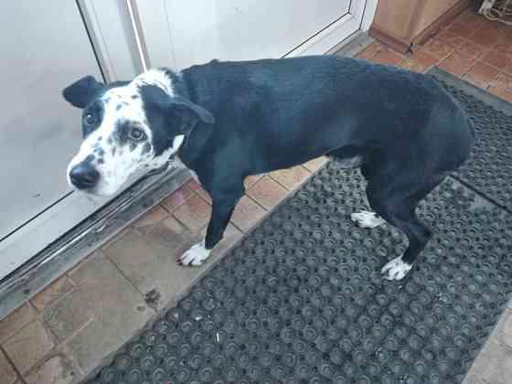 Найден пес Хабаровск