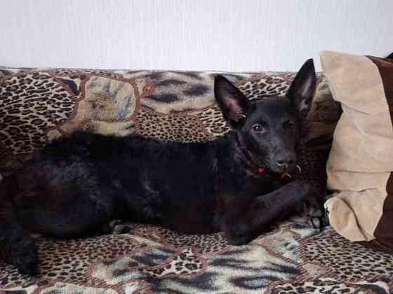 Найдена собачка Хабаровск