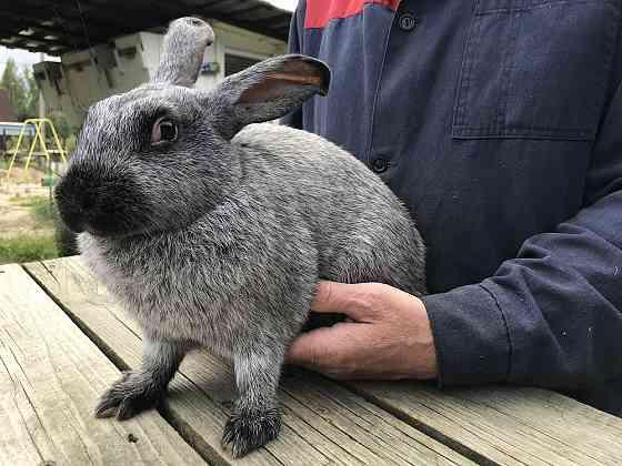Кролики Тосно