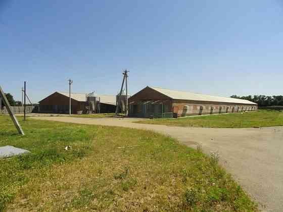 Птицефабрика в Краснодарском крае Краснодар