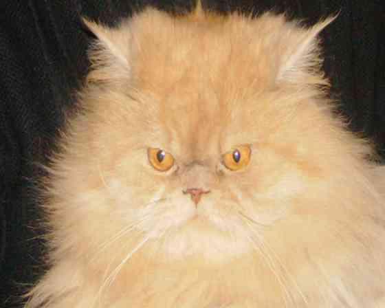 Коты-кошки на передержку Самара