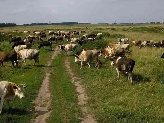 Фермерское хозяйство 68 Га Краснодар